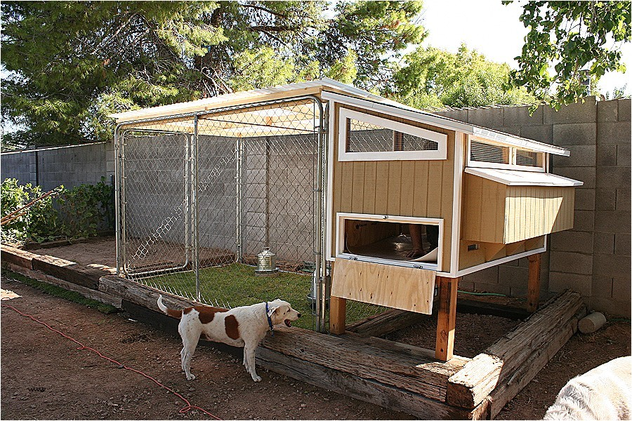 chicken house plans for 20 chickens awesome poultry designs gallery with inside the chicken coop