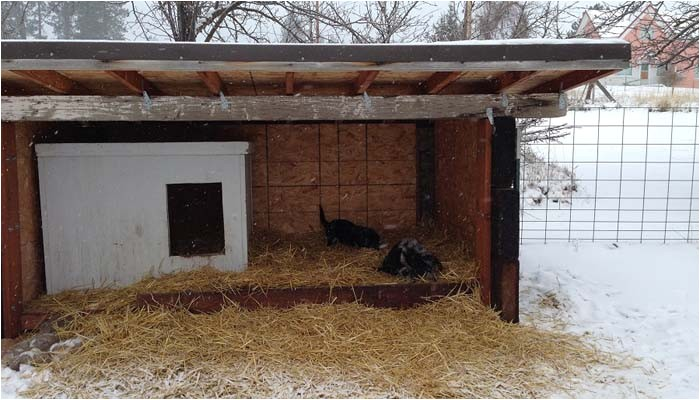 winter dog house plans