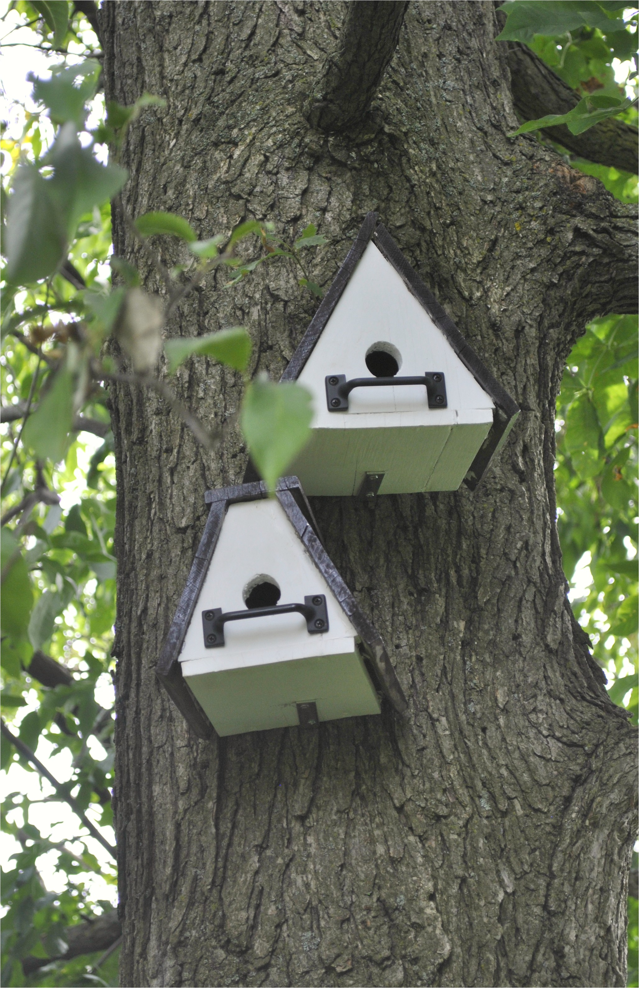 cool bird houses
