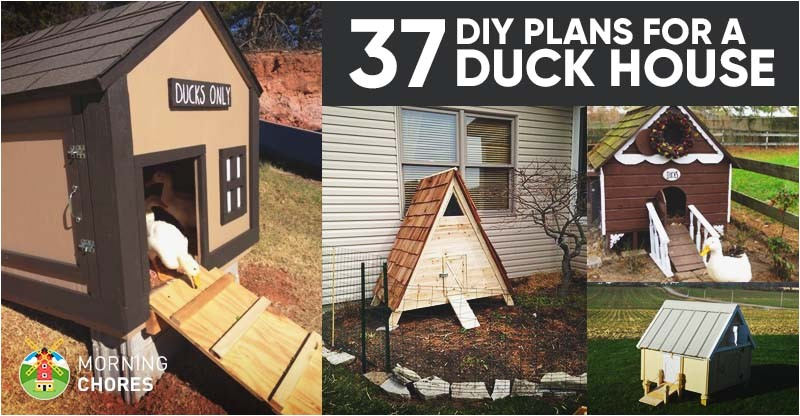duck house plans