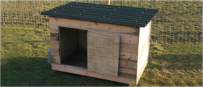 a cheap chicken or duck house