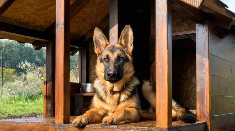 free german shepherd dog house plans