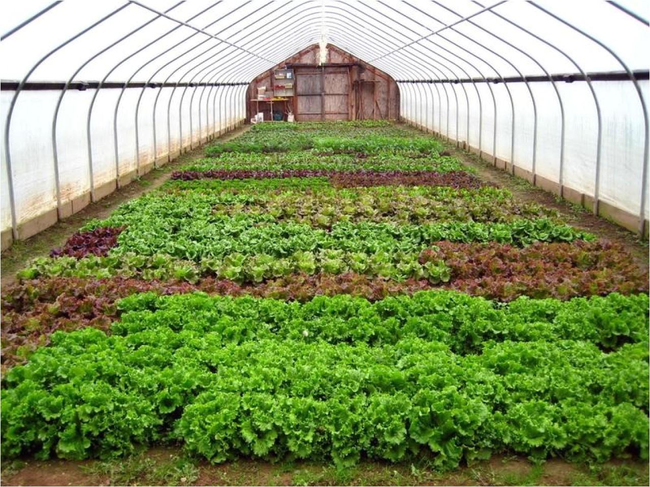 1d10b6d79387adbc winter greenhouse plans large greenhouse