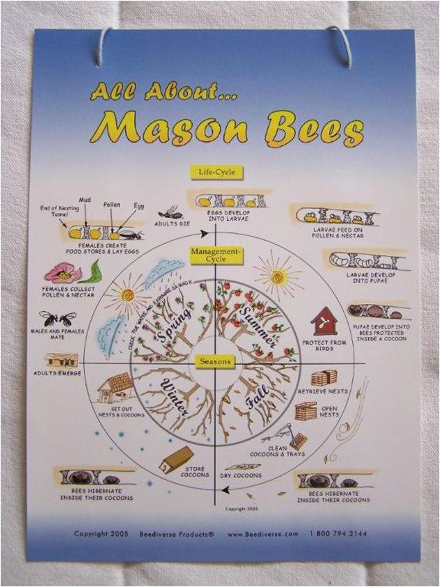 mason bee nest plans