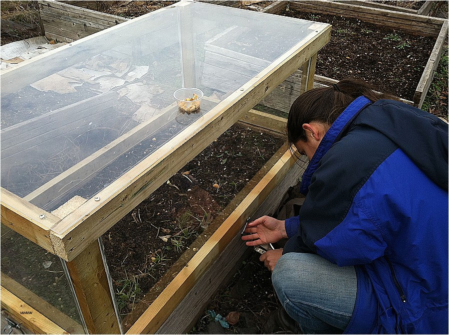 tortoise house plans new green house plans pintrest