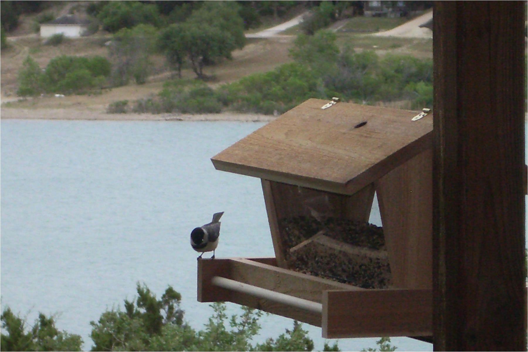 free bird feeder plans 3537052