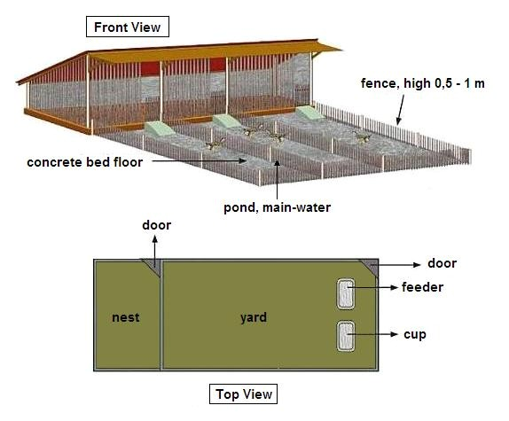 domestic duck house plans