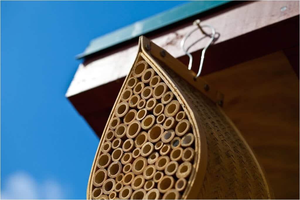 20803 mason bee house