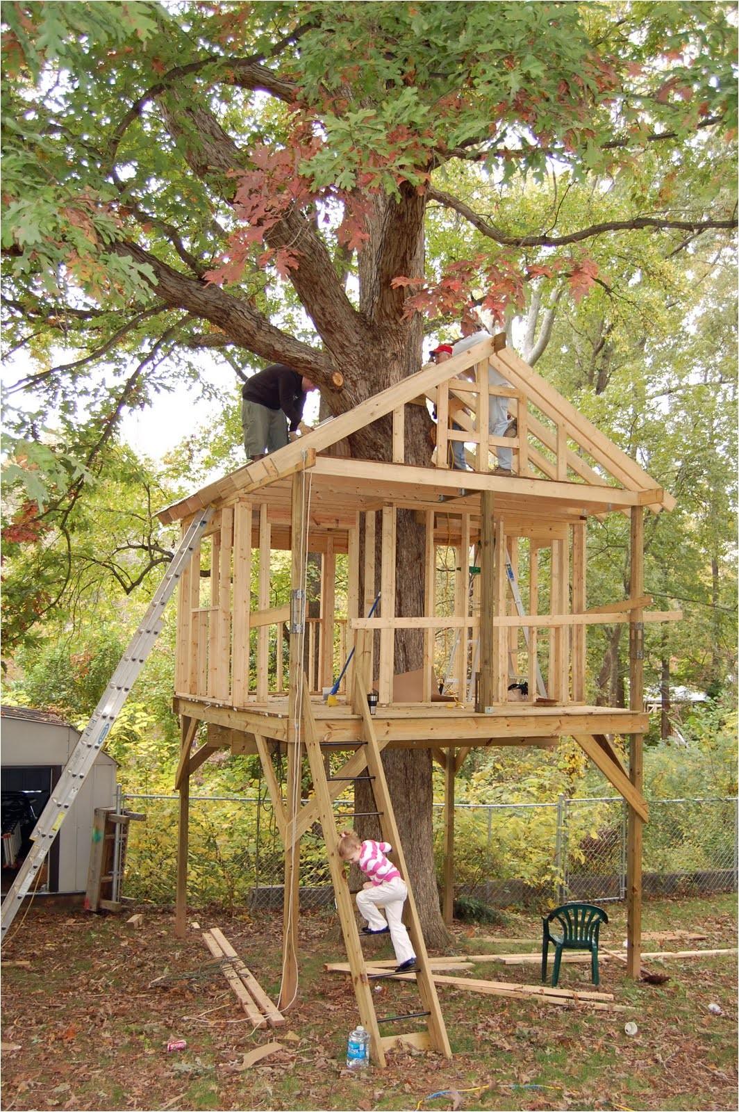 tree house build