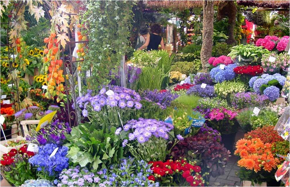 Better Homes and Gardens Flower Garden Plans Una Postal De Primavera Desde Holanda