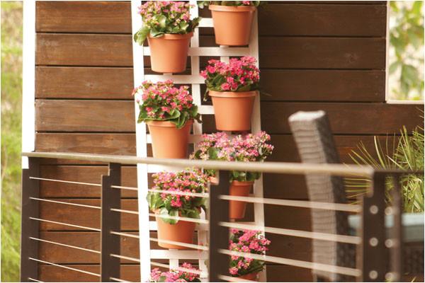 make a vertical garden growing up