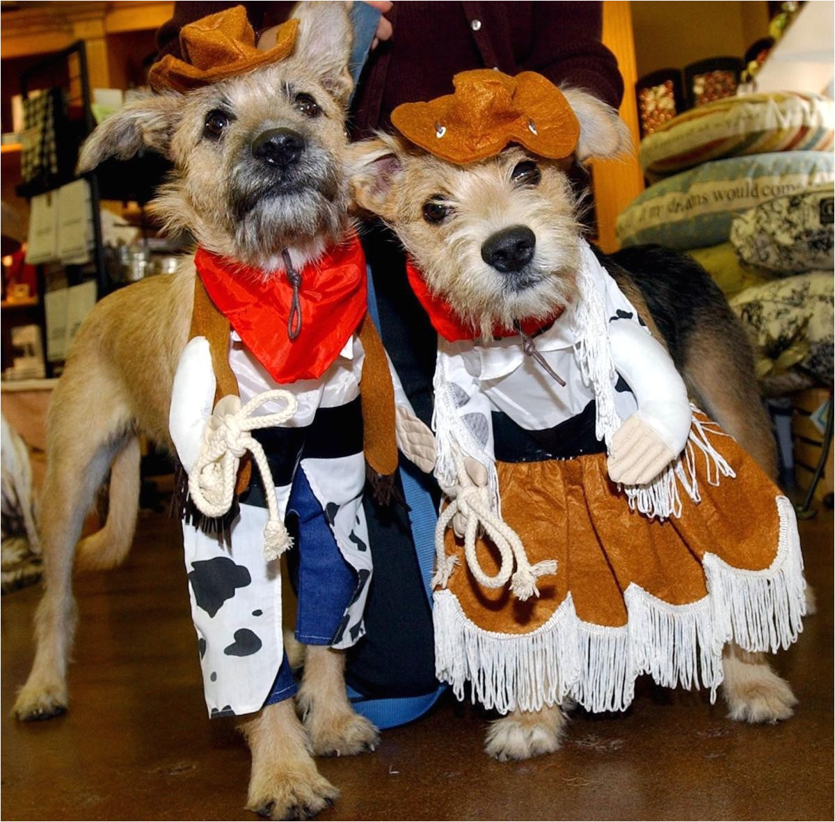 pets at home science plan awesome gallery halloween pet costumes
