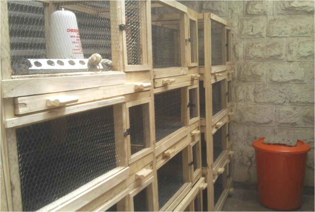 Quail Housing Plans Quail Farming In Kenya Urbanshamba