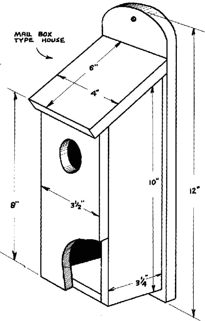 bird house plans for sparrows lovely house sparrow birds in berlin song bird pl luxihome