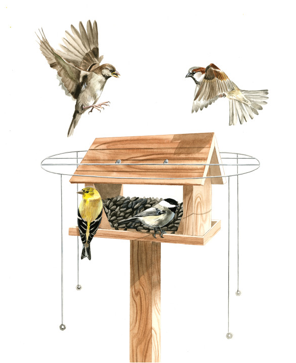 pdf plans bird house plans sparrow download wooden garden projects