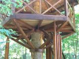 Adult Tree House Plans 18 Best Images About Treehouse On Pinterest Kid Tree