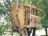 Adult Tree House Plans 30 Diy Tree House Plans Design Ideas for Adult and Kids