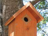 Audubon Bird House Plans Audubon society Bird House Plans House Design Plans