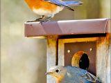 Audubon Bird House Plans Pdf Diy Bluebird House Plans Audubon Download Bookshelf Tv