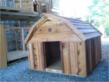 Barn Dog House Plans Elegant Barn Dog House Plans New Home Plans Design