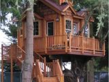 Big Tree House Plans Casa Na Arvore 60 Modelos Para Adultos E Criancas