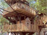 Big Tree House Plans Rachael Caringella Talk2thetrees My Dream House