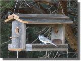 Bird House Feeder Plans Wood Bird Feeder Plans Bird Feeder Patterns Plans for