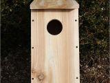 Cedar Bird House Plans 38 Free Birdhouse Plans Guide Patterns