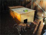 Cold Weather Dog House Plans Ancient Pathways Survival School Llc Diy Dog House Plans