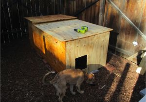 Cold Weather Dog House Plans Ancient Pathways Survival School Llc Diy Dog House Plans