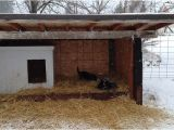 Cold Weather Dog House Plans Winter Dog House Plans