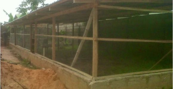 Commercial Chicken House Plans Poultry Farming In Kenya