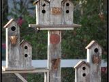 Cool Bird House Plans 25 Best Ideas About Birdhouses On Pinterest Building