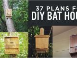 Diy Bat House Plans 37 Free Diy Bat House Plans that Will attract the Natural