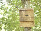 Diy Bat House Plans Free Bat House Plans Do It Yourself Plans Diy Free