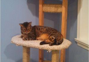 Diy Cat Tree House Plans Build Simple Cat Tree Diy Cedar Mailbox Plans