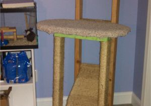 Diy Cat Tree House Plans Homemade Cat Tree Diy On A College Budget