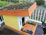 Dog House Plans Home Depot Dog House Home Depot Advantages Of Outdoor Dog Kennel and