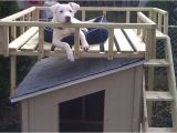 Dog House Plans Home Depot How to Build A Dog House with Sun Deck at the Home Depot