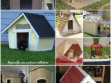 Dog House Project Plans 20 Brilliant Diy Dog Houses to Shelter Your Furry Friends