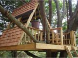 Easy to Build Tree House Plans How to Build A Simple Treehouse Step by Step
