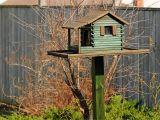 Elaborate Bird House Plans Pdf Diy Elaborate Bird House Plans Download Easy Wood