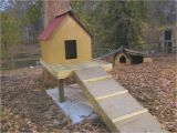 Elevated Dog House Plans How to Build A Dog Treehouse How tos Diy