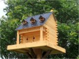 Fancy Bird House Plans Bird Houses the Backyard Naturalist the Backyard