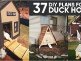 Floating Duck House Plans Instructions 37 Free Diy Duck House Coop Plans Ideas that You Can