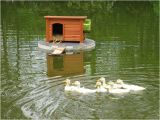 Floating Duck House Plans Instructions Duck Houses On Ponds Here 39 S A Pic Of the Duck House