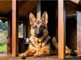 German Shepherd Dog House Plans Free German Shepherd Dog House Plans