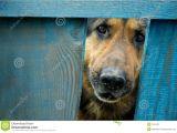 German Shepherd Dog House Plans German Shepherd Dog House Plans About Animals