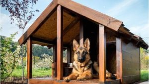 German Shepherd Dog House Plans Pet Talk Building the Ideal Dog House Www Statesman Com
