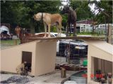Great Dane Dog House Plans Dog House Great Dane 28 Images Great Dane Not In the